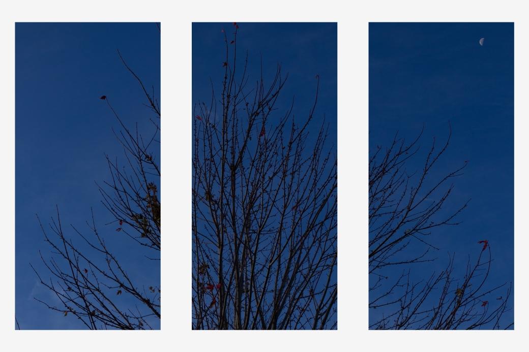 johnson_triptych05